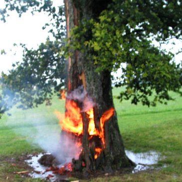Baumbrand nach Blitzschlag